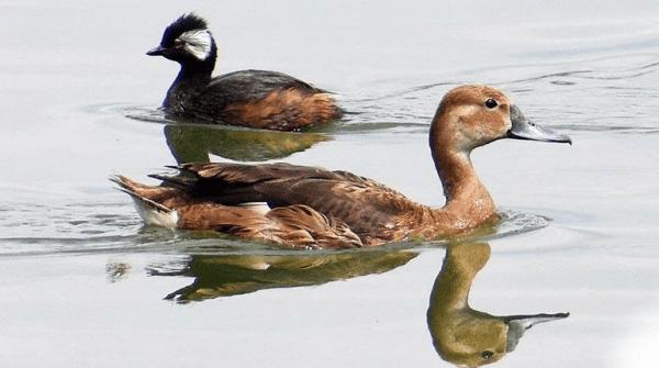 Aves en la Laguna Alalay. Los Tiempos